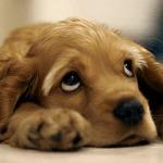 sad_looking_dog
