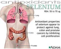 selenium7