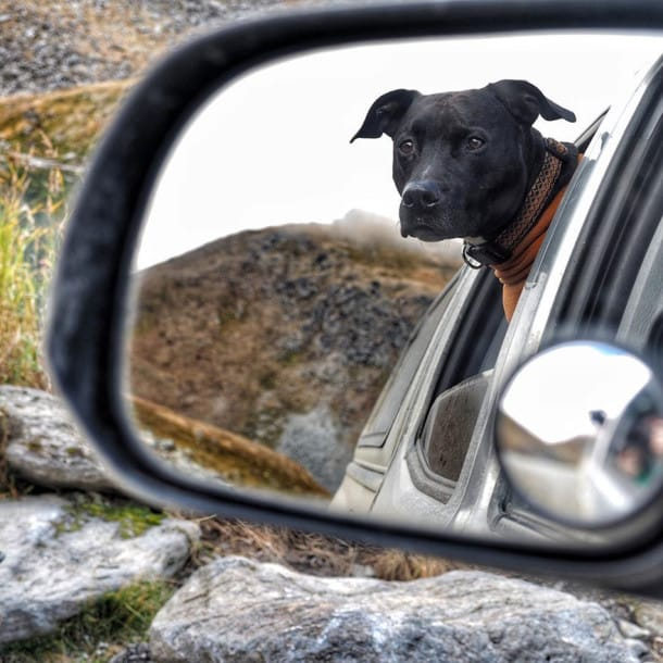truck-travel-with-dog-dwayne-parton-alaska