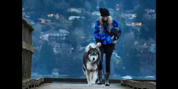 Kyro-le-husky-a-donne-a-Amanda-le-courage-de-quitter-son-compagnon-violent33