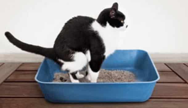 voici une astuce au top pour lutter contre les mauvaises odeurs de la liti re de votre chat. Black Bedroom Furniture Sets. Home Design Ideas