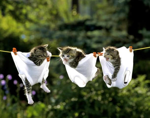 tris_chatons_dans_culottes