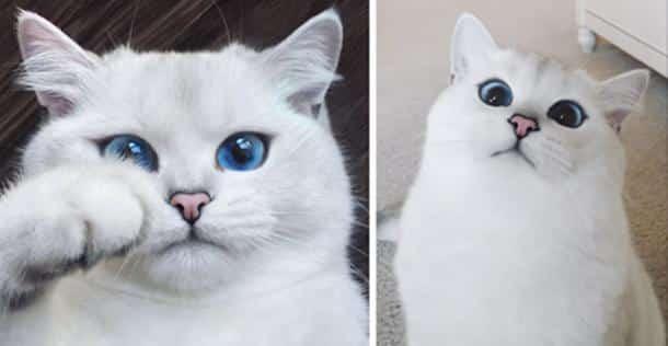 Résultats de recherche d'images pour «beau chat»