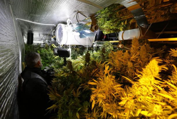 Vid o une usine de culture de cannabis d couverte pr s for Cannabis plantation interieur