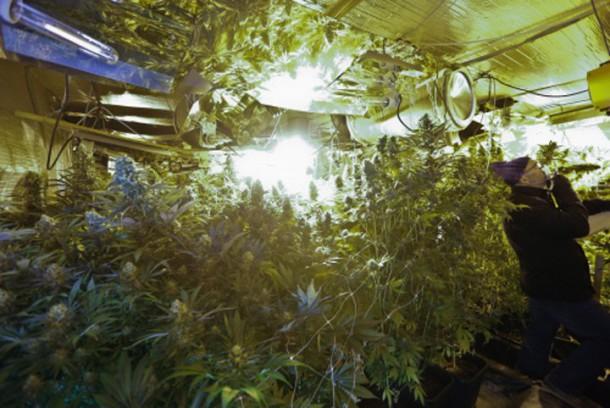 VIDÉO : une usine de culture de cannabis découverte près de Lille ...