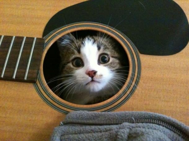 """Résultat de recherche d'images pour """"chat mélomane"""""""