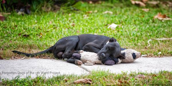 Quand elle a vu ce chien abandonné avec sa peluche, elle l'a trouvé trop mignon…mais en fait…