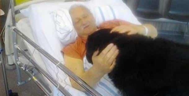 en phase terminale d 39 un cancer l 39 h pital lui autorise un dernier adieu son chien touchant. Black Bedroom Furniture Sets. Home Design Ideas
