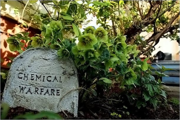 Jardin empoisonné 13