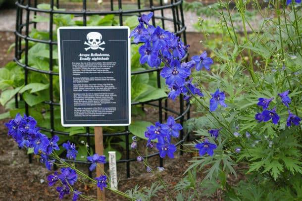 Jardin empoisonné 14
