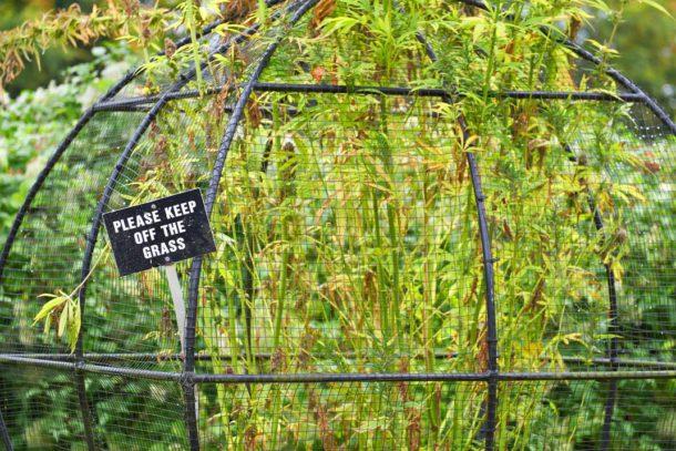 Jardin empoisonné 6