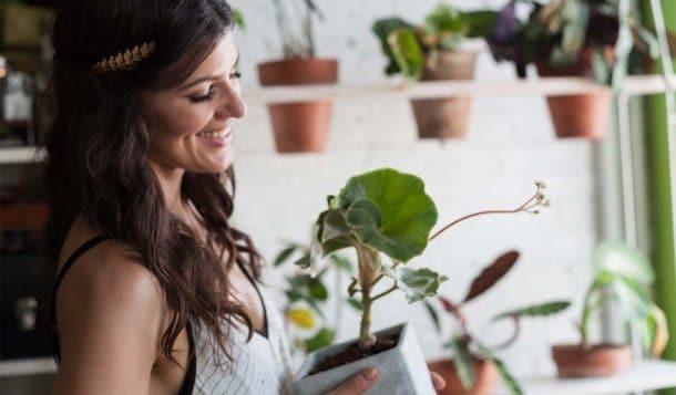500 plantes vertes