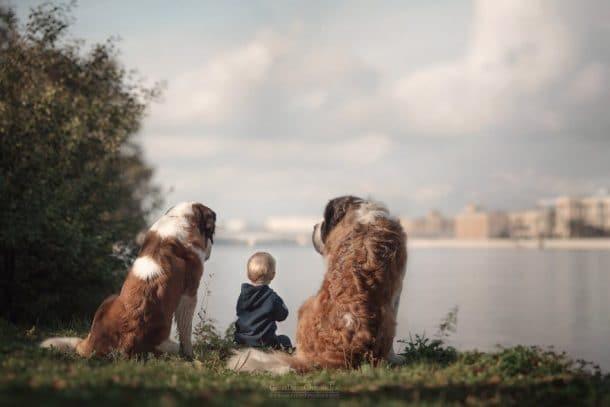 Deux gros chiens et un enfant