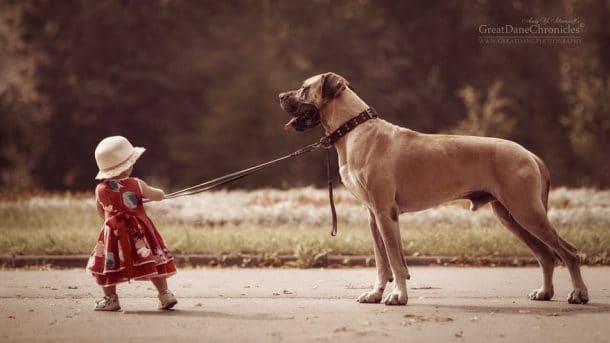 Petite fille qui promène un énorme chien
