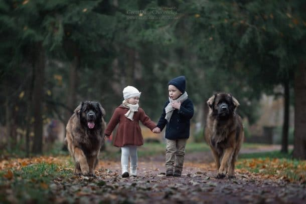 Deux chiens et deux enfants