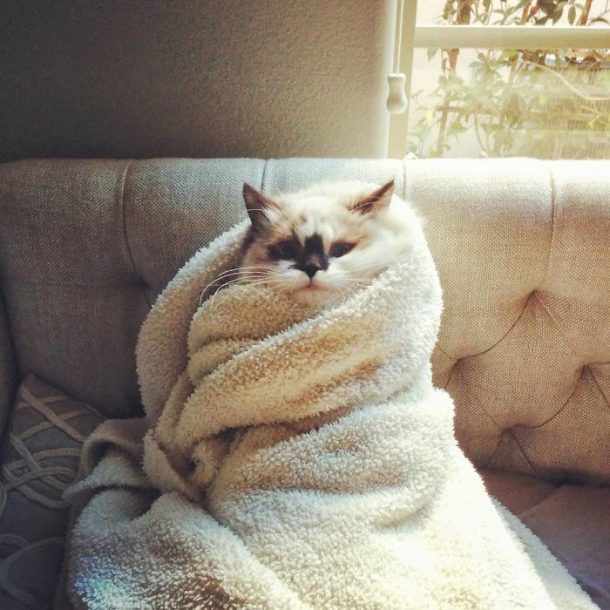 wrap cat Albert