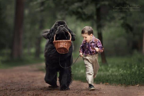 Un gros chien et un garçon