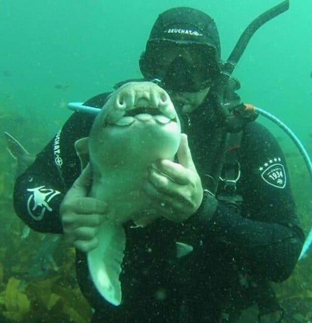 Rick Anderson et son ami le requin de Port Jackson