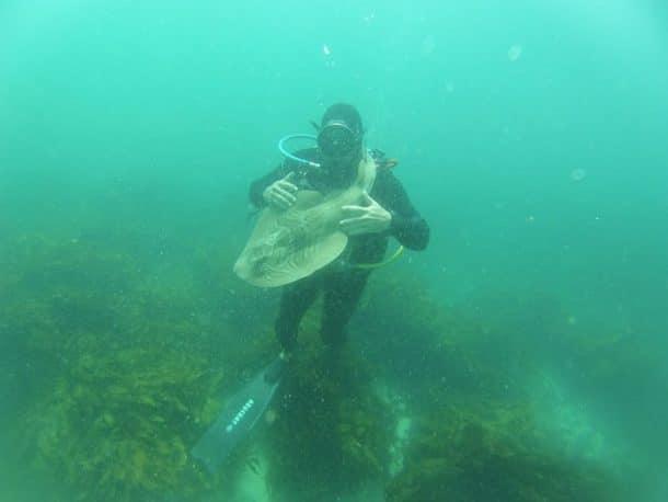 Le plongeur Rick Anderson caresse un requin de Port Jackson