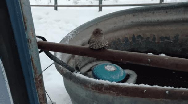 petit oiseau collé à la barrière