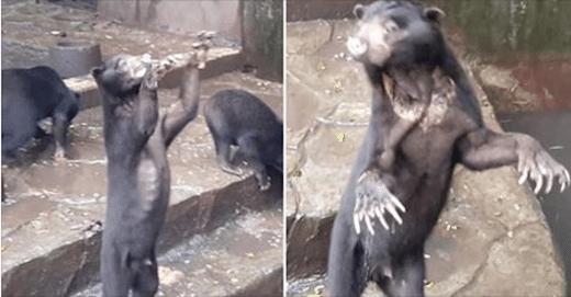 Indonésie. Les ours squelettiques d'un zoo émeuvent les internautes