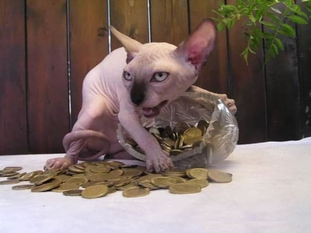 15 photos qui prouvent que les chats sont des êtres ...