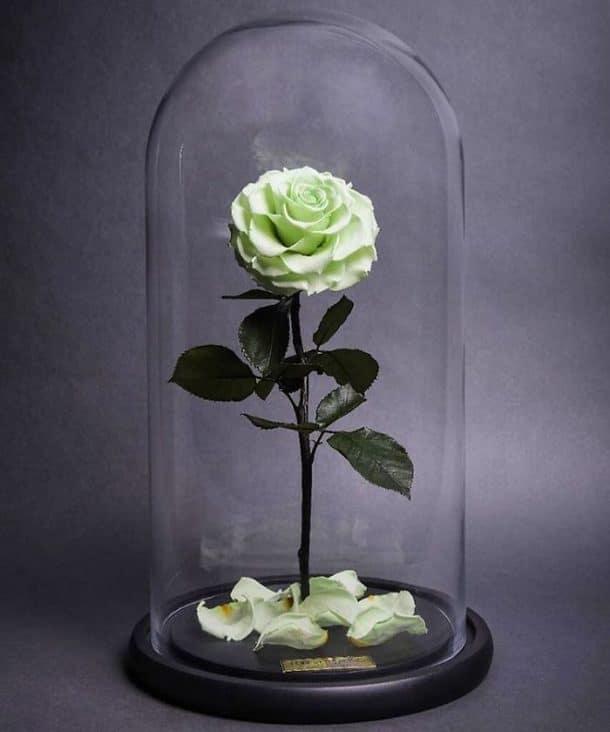 """la rose éternelle dans """"la belle et la bête"""" existe vraiment"""