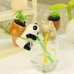 Cute la mini plante panda qui s 39 arrose toute seule - Combien coute un avocat commis d office ...