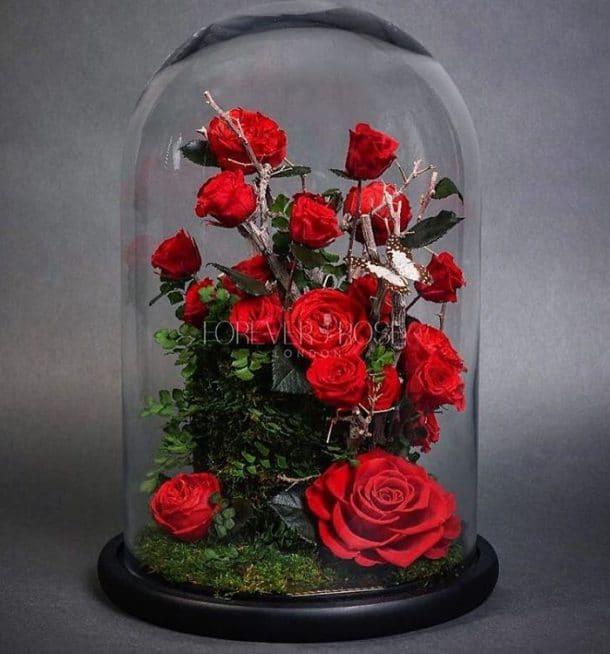 La rose ternelle dans la belle et la b te existe vraiment vous la voulez - Rose sous cloche la belle et la bete ...