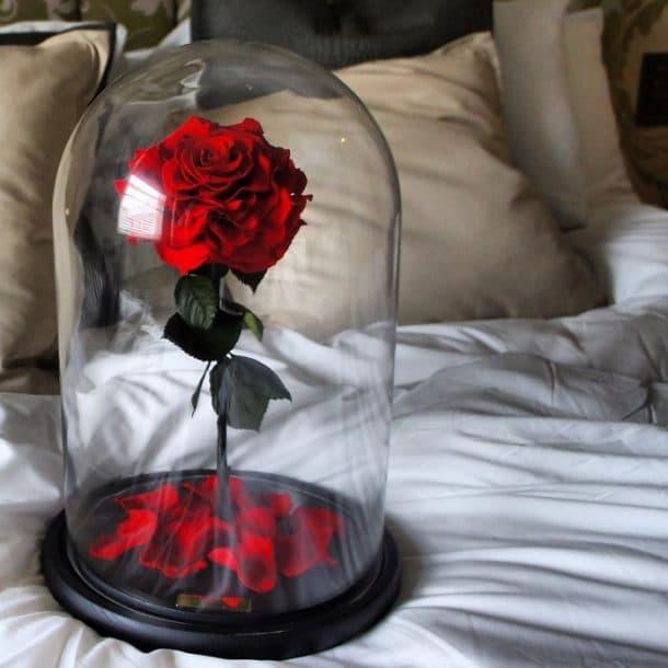 La Rose Eternelle Dans La Belle Et La Bete Existe Vraiment Vous