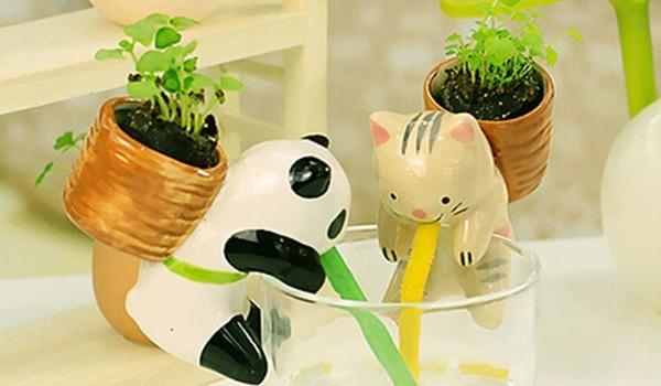 cute la mini plante panda qui s 39 arrose toute seule. Black Bedroom Furniture Sets. Home Design Ideas