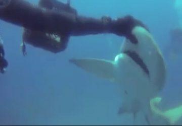 requin demande aide