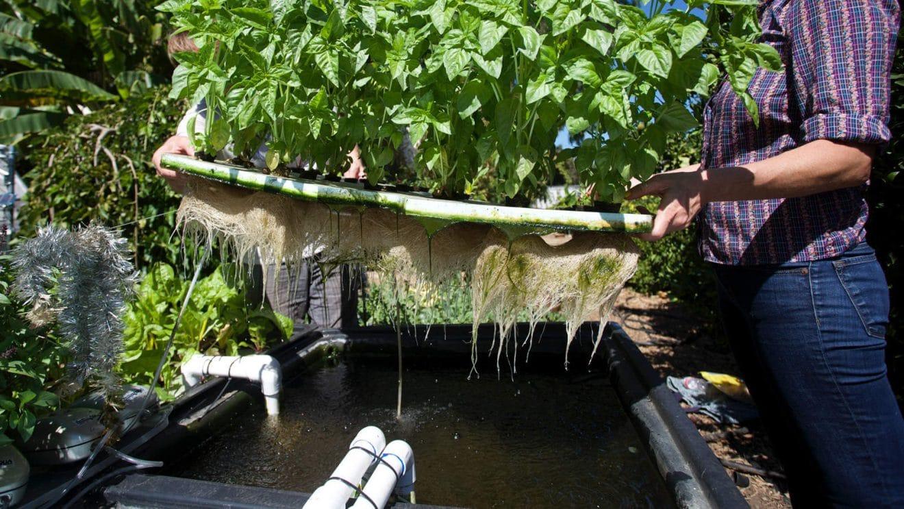 l 39 aquaponie faire pousser des plantes sans terre ni engrais gr ce des poissons vid o. Black Bedroom Furniture Sets. Home Design Ideas