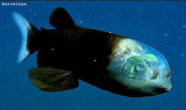 Ces poissons terrifiants vont vous donner la phobie des for Donner poisson