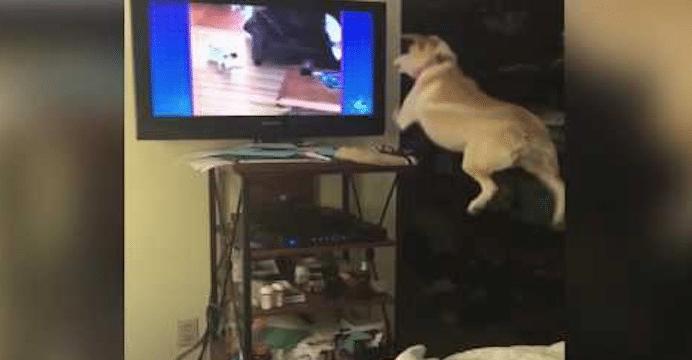 Ce chien veut jouer avec les chiens qu'il voit à la