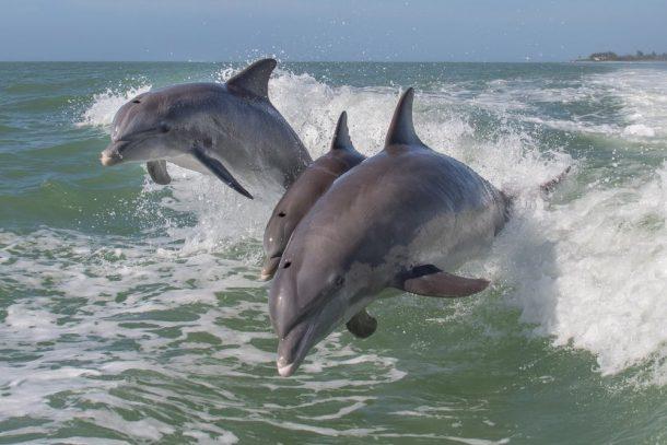 orques et dauphins en captivite