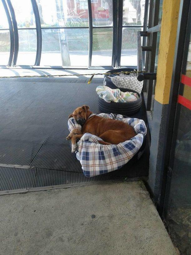 chiens errants dans une satation de bus au bresil