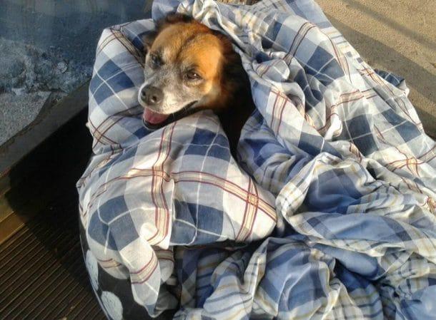 chiens errants compagnie Barreirinha