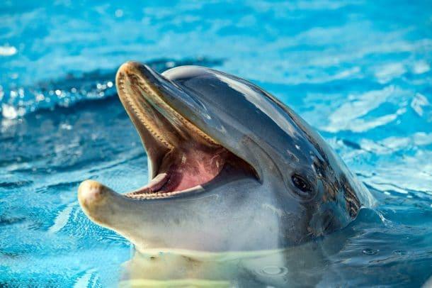 dauphins et orques en captivite