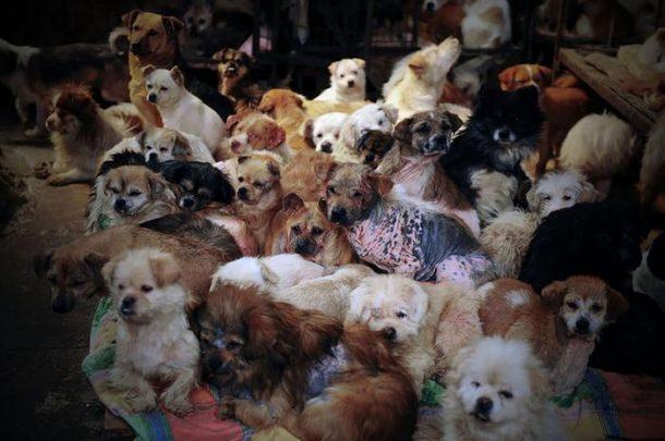 viande de chien yulin