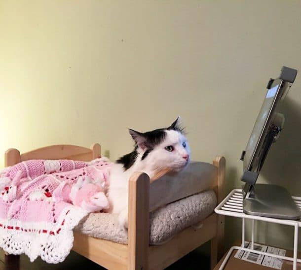 elle va vous faire craquer faites la rencontre de sophie le chat qui dort dans un petit lit. Black Bedroom Furniture Sets. Home Design Ideas
