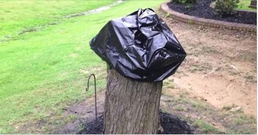 Que faire avec un tronc d'arbre coupé