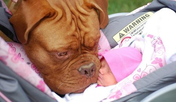 chiens et bebes