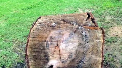 son mari coupe un arbre mort dans leur jardin mais deux. Black Bedroom Furniture Sets. Home Design Ideas