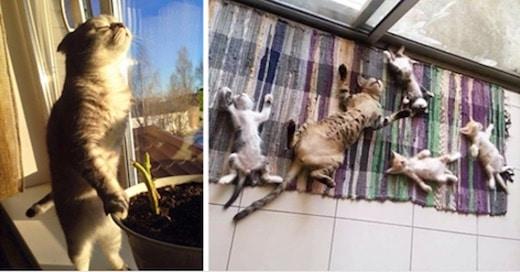 chats au soleil