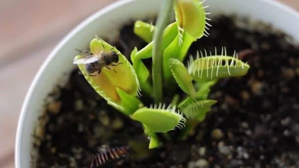 plante carnivore 01