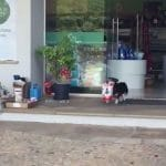 chien va chercher sac de croquettes