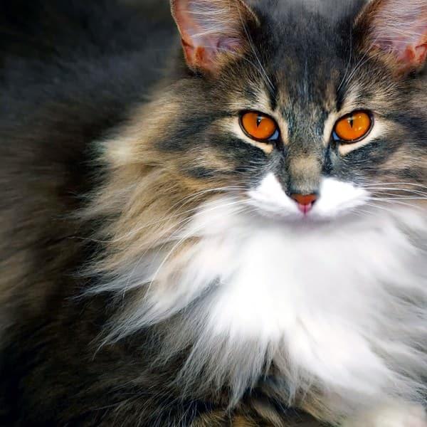 36 faits incroyables et surprenants sur les chats que vous - A quel age couper les griffes d un chat ...