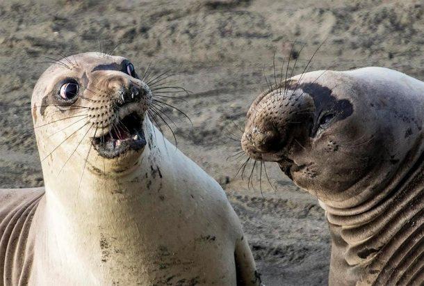 photos d'animaux rigolotes