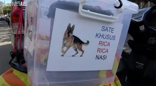 bali viande canine